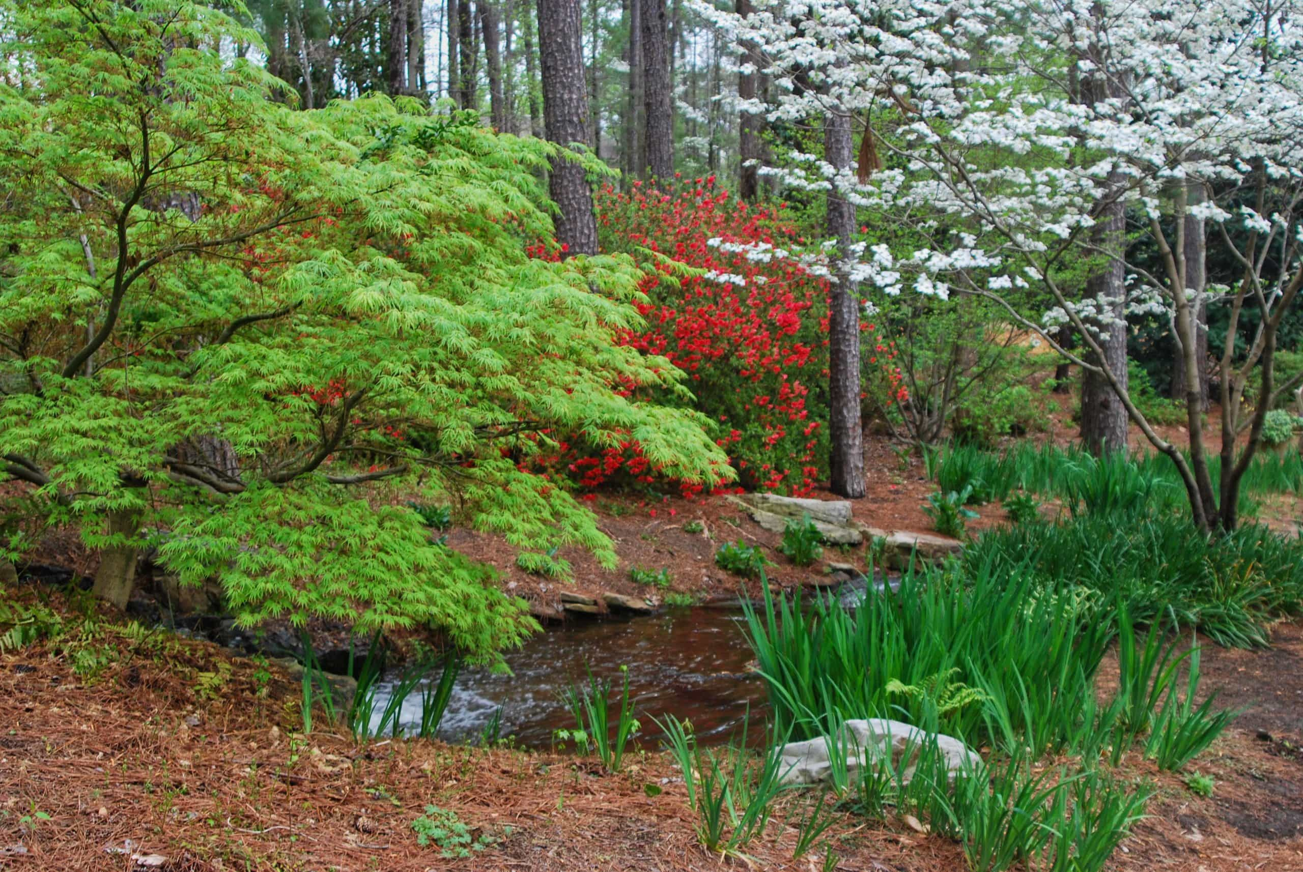 Woodland garden at Aldridge Botanical Gardens