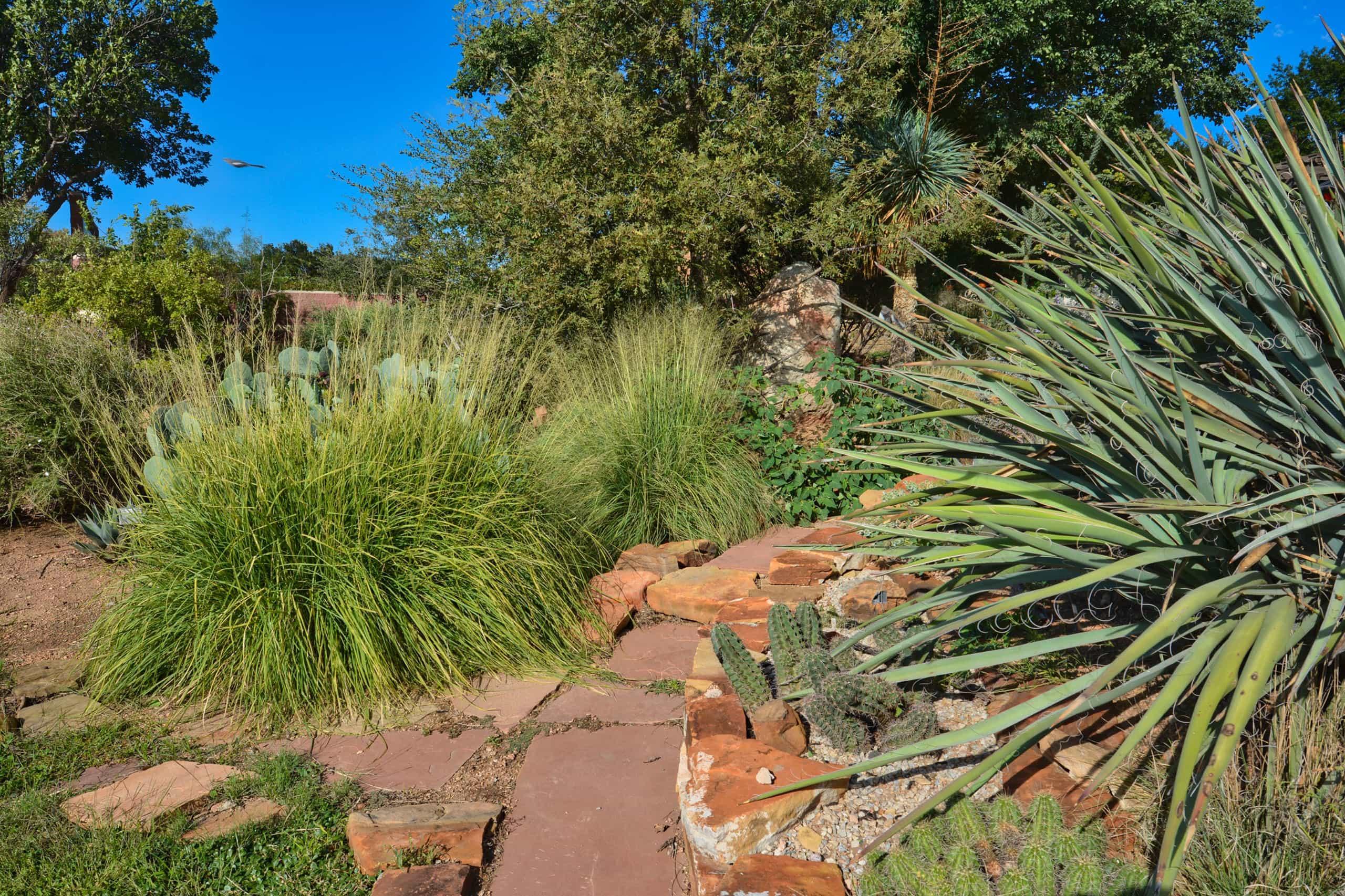 Amarillo Botanical Gardens desert plants