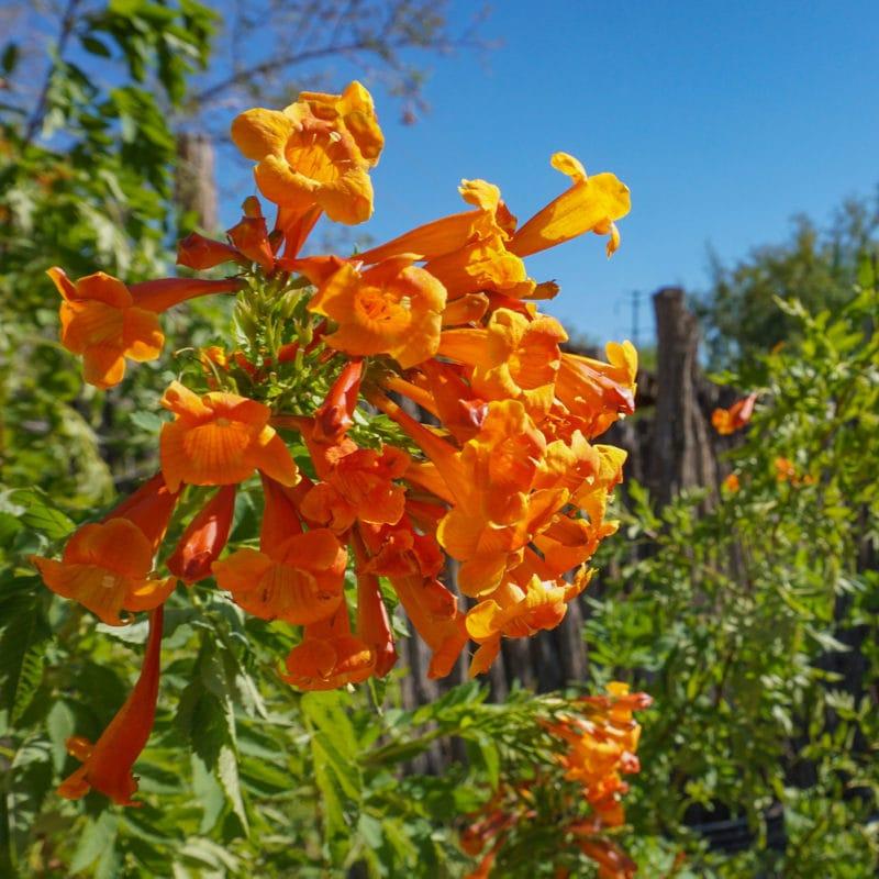 El Paso Desert Botanical Garden, TX